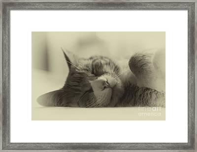 Sweet Dreams Framed Print by Nicki McManus