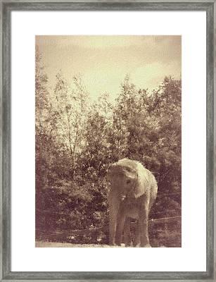 Sweet Elefanta Framed Print by The Art Of Marilyn Ridoutt-Greene