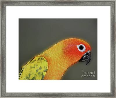 Sweet Face Framed Print