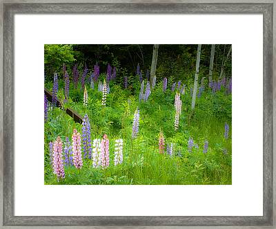Sweet Flowers Of Summer Framed Print