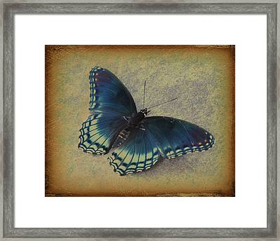 Sweet Flutterby Framed Print by Jan Amiss Photography