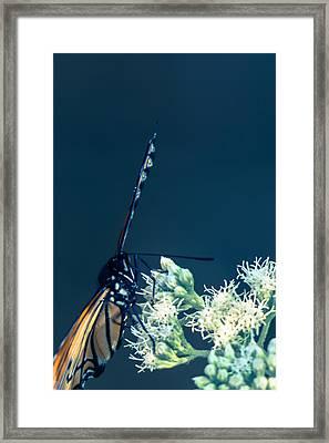 Sweet Freedom  Framed Print by Kristin Hunt