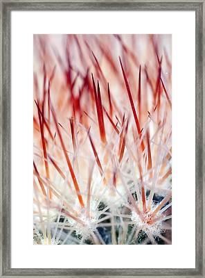 Sweet Gentle Pink Blooming Cacti Framed Print