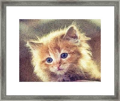 Sweet Ginger Fuzz Framed Print