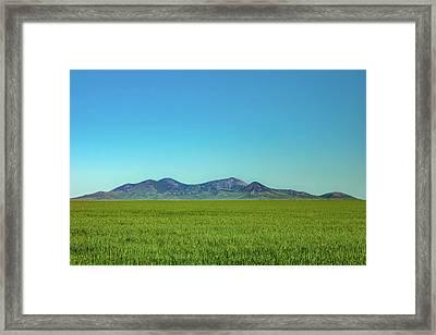 Sweet Grass Gree Framed Print