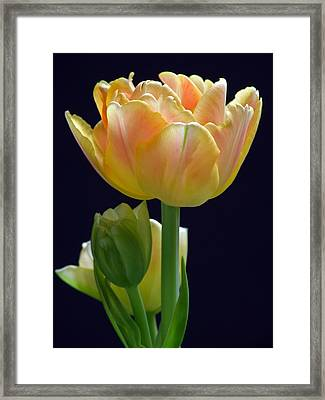 Sweet Happiness Framed Print by Juergen Roth