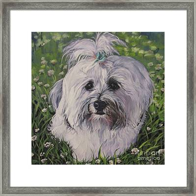 Sweet Havanese Dog Framed Print by Lee Ann Shepard
