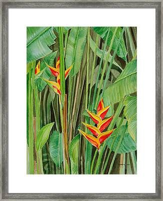 Sweet Heliconias Framed Print by Anji Worton
