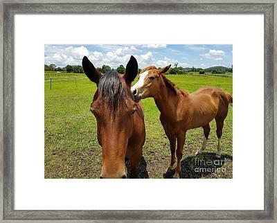 Sweet Horses  Framed Print