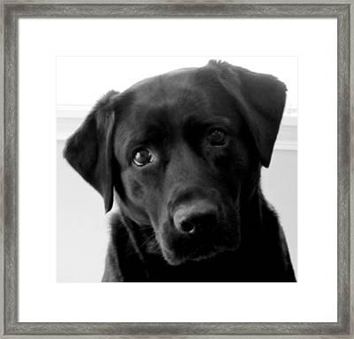 Sweet In Black Framed Print by Kathy Sheeran
