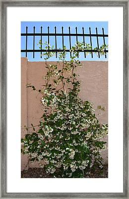 Sweet Jasmine Framed Print by Aimee L Maher Photography and Art Visit ALMGallerydotcom