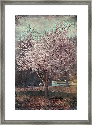 Sweet Kisses Under The Tree Framed Print by Laurie Search