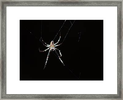 Sweet Lady Guarding Shed Framed Print