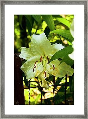 Sweet Light Framed Print by Kat Besthorn