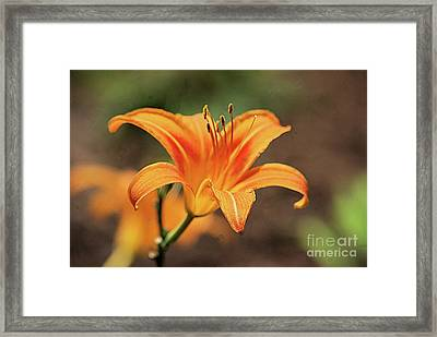 Sweet Lilly In Orange Framed Print