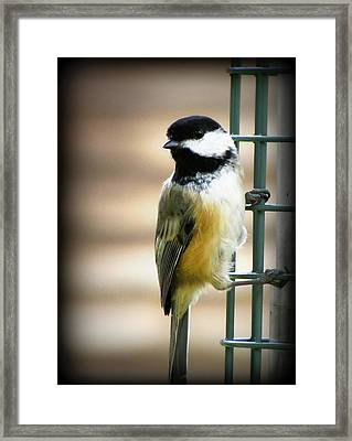 Sweet Little Chickadee Framed Print by Lisa Jayne Konopka