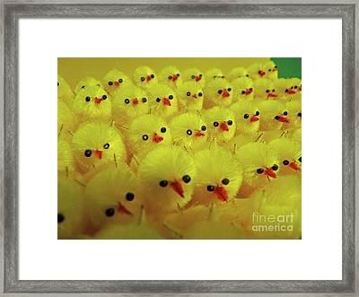 Sweet Little Chicks Waiting For Easter Framed Print