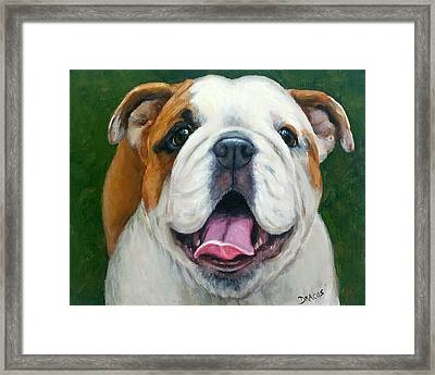 Sweet Little English Bulldog Framed Print