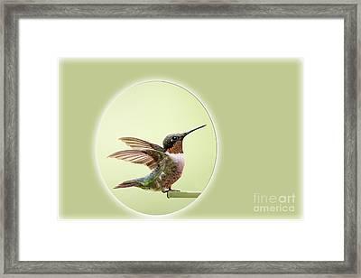 Sweet Little Hummingbird Framed Print by Bonnie Barry