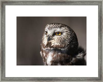 Sweet Little Owl Framed Print