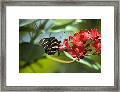 Sweet Nectar Framed Print by Carolyn Marshall