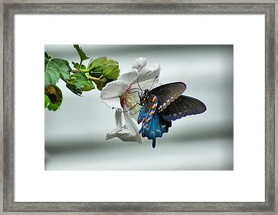 Framed Print featuring the photograph Sweet Nector by Rick Friedle