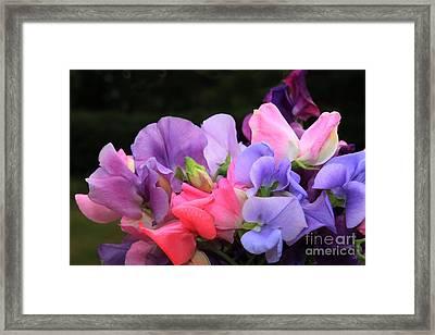 Sweet Pea Floral Framed Print