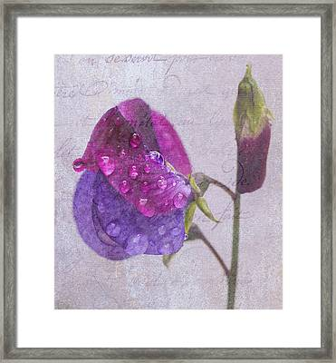 Sweet Pea Raindrops Framed Print