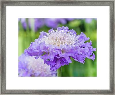 Sweet Petal Framed Print