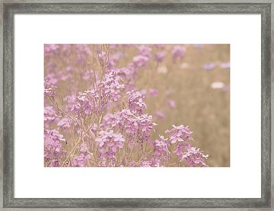 Sweet Pink Blossoms Framed Print