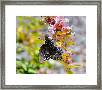 Sweet Pink Framed Print by JAMART Photography