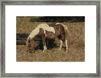 Sweet Pony Framed Print by The Art Of Marilyn Ridoutt-Greene