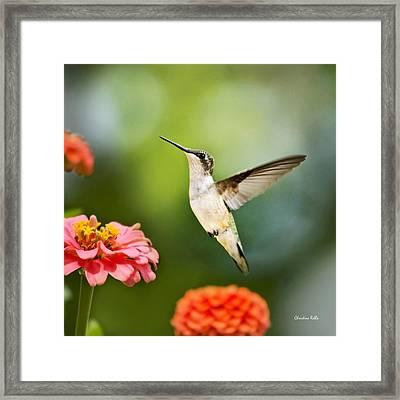 Sweet Promise Hummingbird Square Framed Print