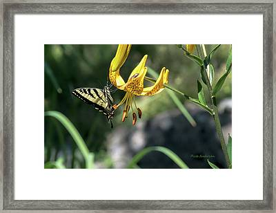 Sweet Resting Place Framed Print