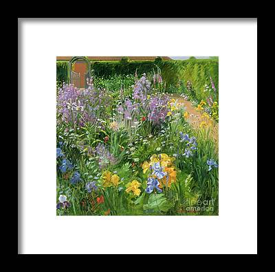 Foxglove Flowers Framed Prints