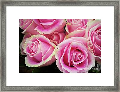 Sweet Rose For All The Lovely Ladies Who Comment On My Work Framed Print