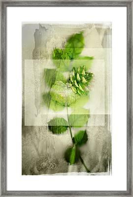 Sweet Rustic Pine Framed Print by Dan Turner