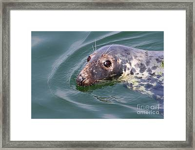 Sweet Seal Framed Print
