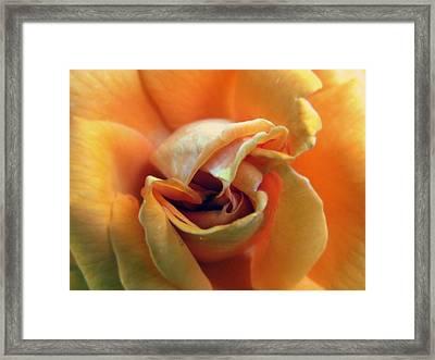 Sweet Seduction Framed Print