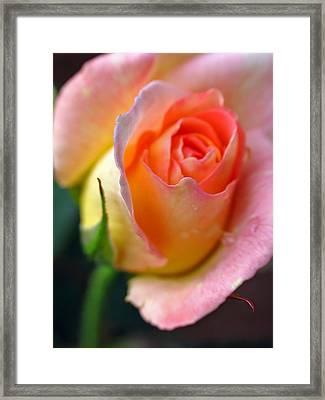 Sweet Sixteen Framed Print