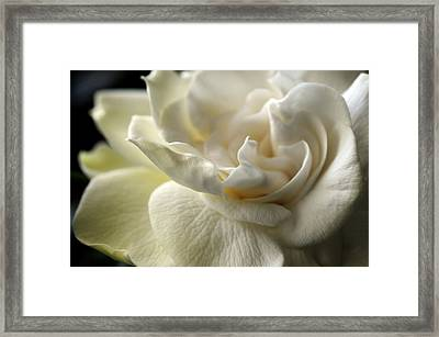 Sweet Smell Of Love Framed Print