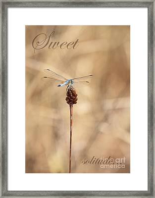 Sweet Solitude Framed Print by Carol Groenen