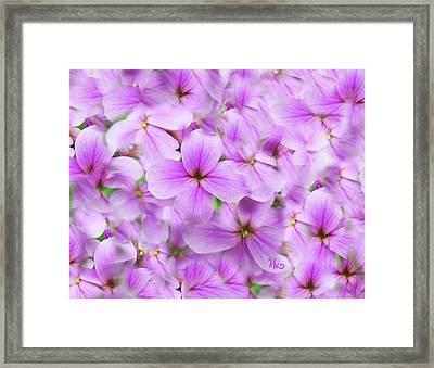 Sweet Spring Meadow Flox Framed Print
