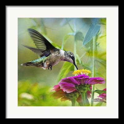 Wildlife In Gardens Framed Prints