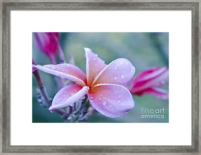 Sweet Things Framed Print by Sharon Mau