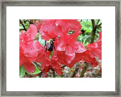 Sweet To Be An Azalea Tree Framed Print