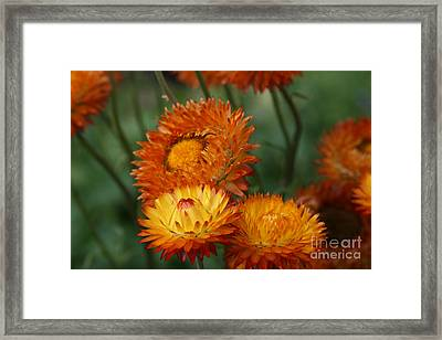 Sweet Was The Song Framed Print