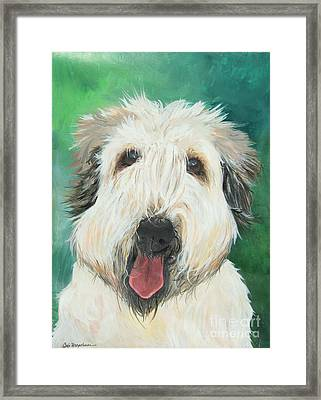 Sweet Wheaton Framed Print by Deb Magelssen