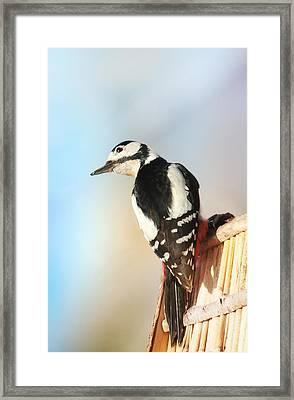 Sweet Woodpecker Framed Print