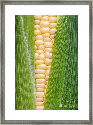 Sweetcorn Framed Print by Tim Gainey